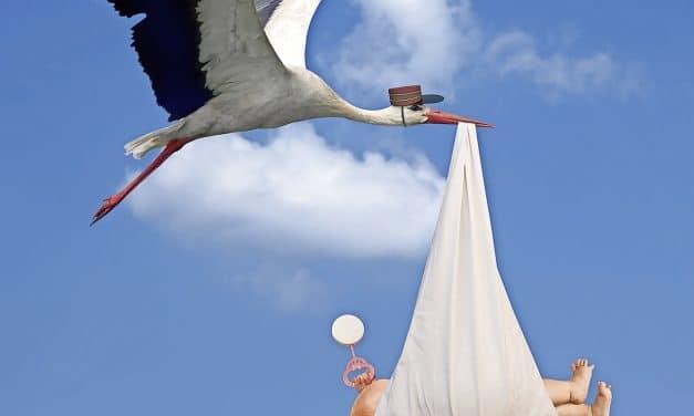 Wenn der Storch zubeisst
