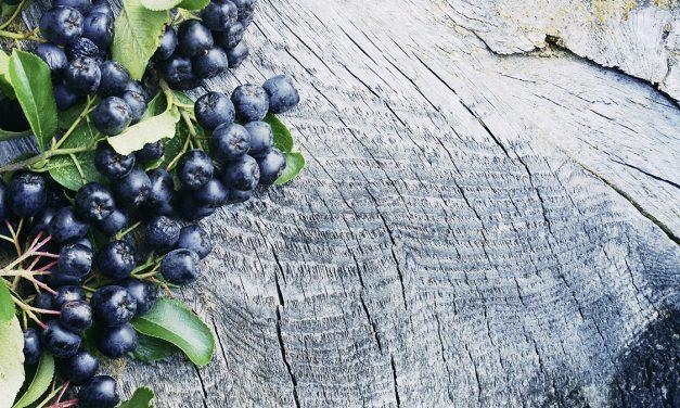 Aronia – eine kleine Beere mit grossem Potential