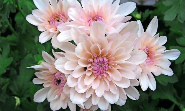 Furioses Blütenspektakel